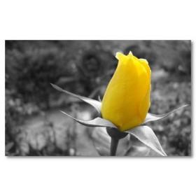 Αφίσα (μαύρο, λευκό, άσπρο, λουλούδι)